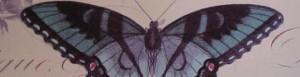 cropped-sbutterfly1.jpg